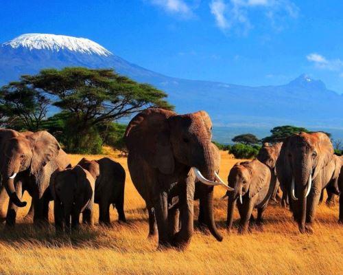 Топ-5 лучших мест для сафари в Африке