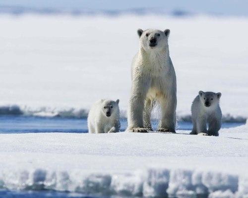 Туристическое направление – Арктика