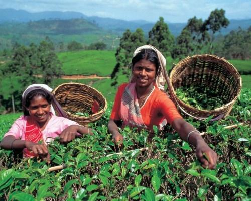 Опасности острова Шри-Ланка